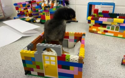 3rd Class: Lego Houses for Chickens