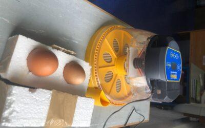 Egg-citing News